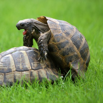 Ever Heard A Turtle Get An Orgasm Its Worth Your While We Promise Ecoexciting